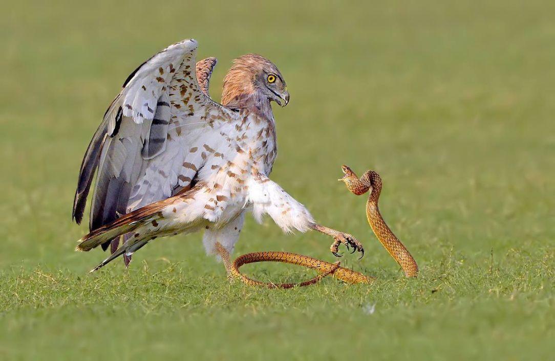 snakeingrass
